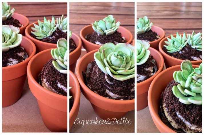 Succulent Cupcakes in a Pot